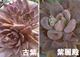 微妙な時期の花芽達