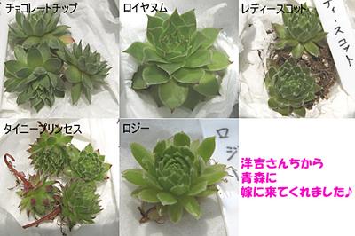 センペル紹介2