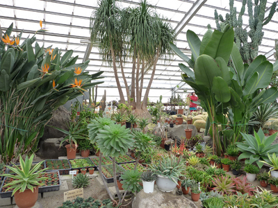 2月の温室