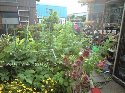 7月の庭.